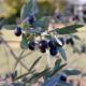 Fiori e olive